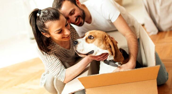 How to safely move your pets?