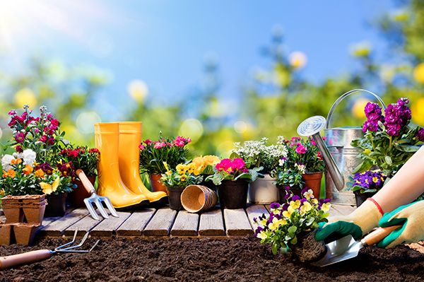 How to prepare your garden for next summer