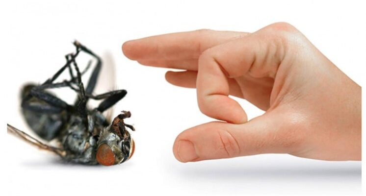 Steps to Getting Rid of Creepy Crawlies in Your Home